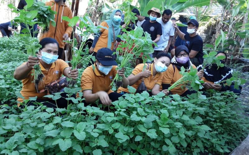 Desa Dauh Puri Kaja Panen Perdana Sayur Bayam Program PKT